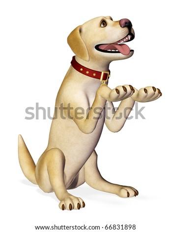 dog beging - stock photo