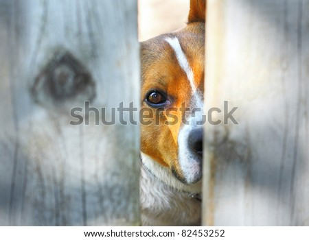 Dog behind a fence - stock photo