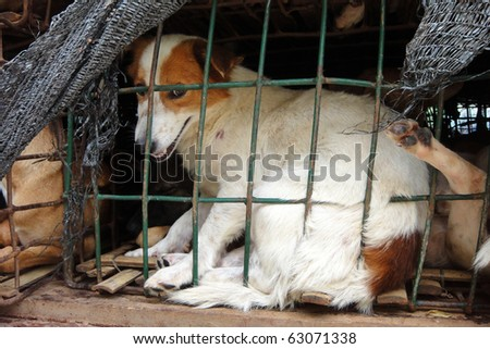 Dog behind a fence waiting for the freedom - stock photo