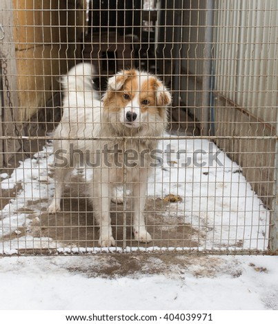 dog behind a metal fence