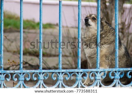Dog behind an iron fence