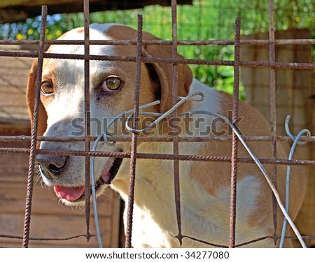 Dog behind the wire