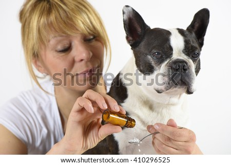 dog Boston Terrier at veterinarian - stock photo