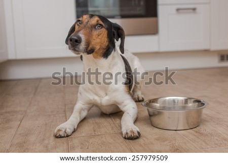 dog bowl hungry meal eating - stock photo