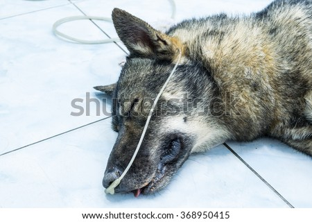 Dog breathing through an oxygen tube - stock photo