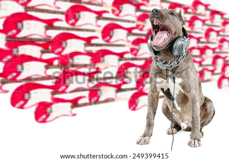 Dog breed pit bull sitting with headphones and loud singing on the background blurry guitars - stock photo