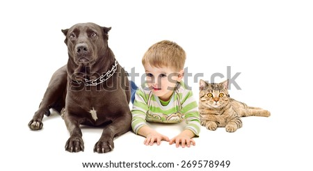 Dog breed Staffordshire Terrier, boy and cat Scottish Straight lying together isolated on white background - stock photo