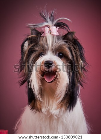 dog breeds - stock photo