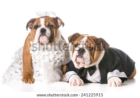 dog bride and groom puppies - stock photo