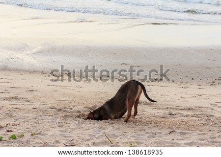 Dog burying his head in the sand at Rayong beach,Thailand. - stock photo