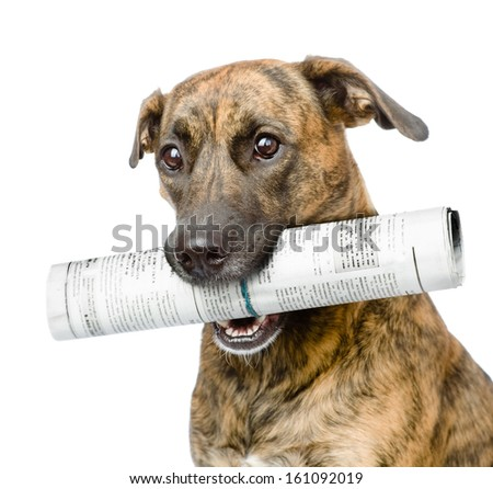 dog carrying newspaper. isolated on white background - stock photo
