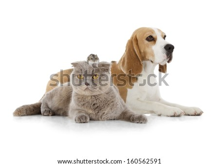 dog, cat and mouse isolated on white - stock photo