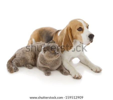 dog, cat and mouse isolated on white background - stock photo