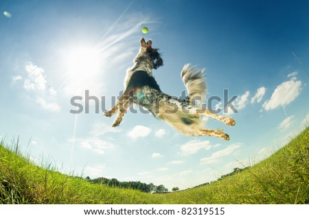 Dog catching a ball in mid-air