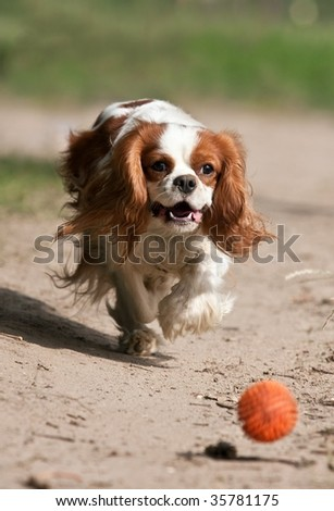 dog catching the ball - stock photo