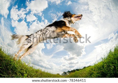 Dog caught in the middle of a jump - stock photo