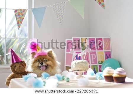 Dog celebrating birthday having a birthday party - stock photo