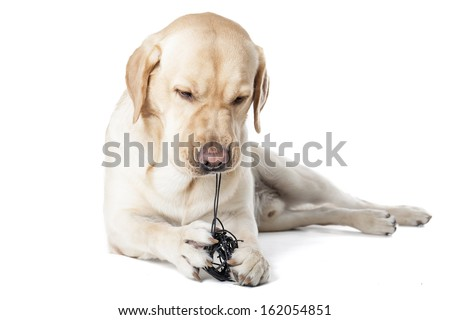 dog chewing on a toy on a white background in studio