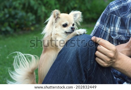 Dog clicker or magazine training with positive reinforcement, chihuahua and its owner or trainer - stock photo
