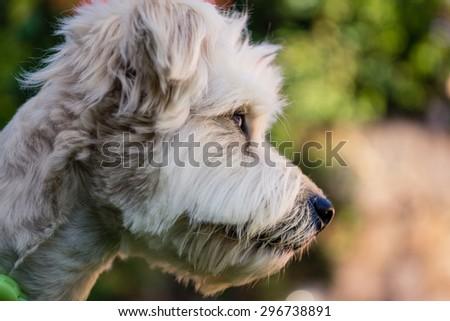 Dog close up portrait - stock photo