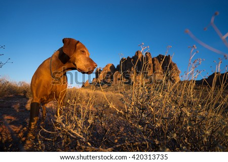dog closeup in superstition mountains arizona