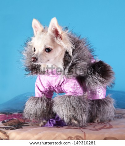 dog clothes, coveralls, dress. Pet products