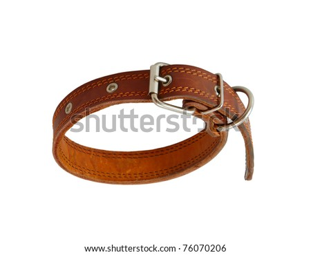 dog collar isolated on a white background - stock photo