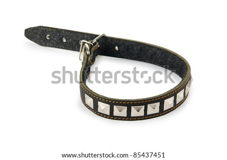 Dog collar isolated on the white background - stock photo
