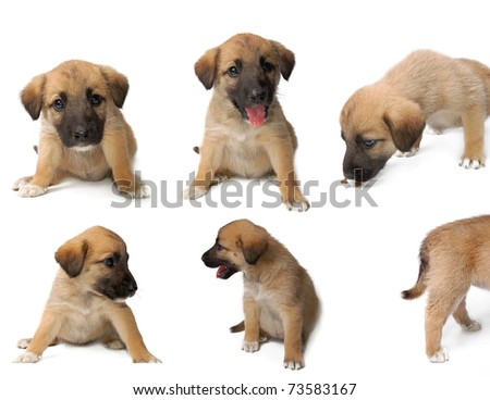 Dog collection isolated on white background - stock photo