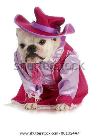 dog cowgirl - english bulldog dressed in cowgirl costume on white background - stock photo