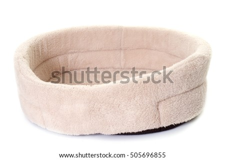 dog cushion in front of white background