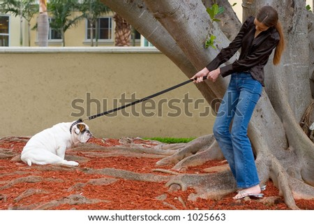 Dog Day Afternoon - Dog walking and training - stock photo