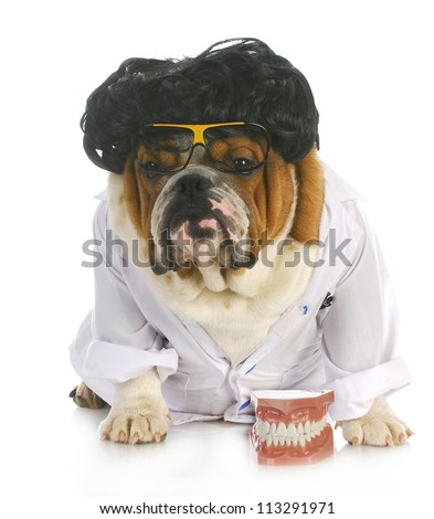 dog dentistry - english bulldog dentist in lab coat with teeth - stock photo