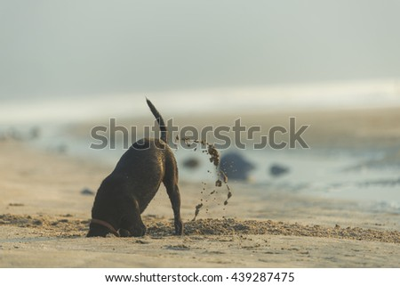Dog diging sand on the beach - stock photo