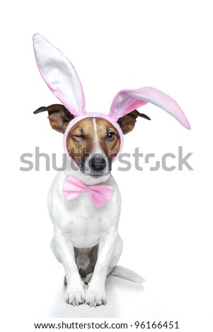 dog dressed as a easter bunny - stock photo