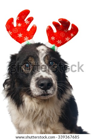 dog dressed as a reindeer - stock photo