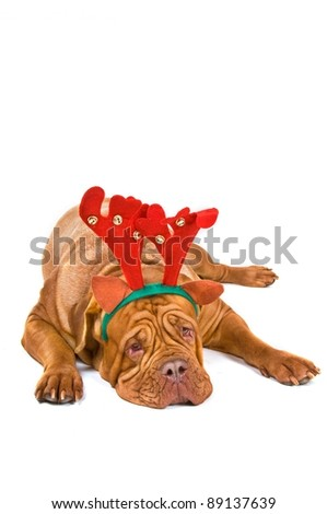Dog Dressed as Christmas reindeer - stock photo