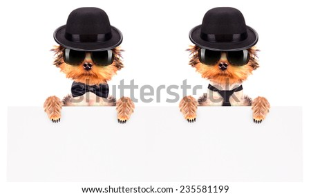 Dog dressed as mafia gangster and holding white paper banner