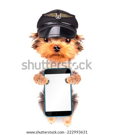 dog  dressed as pilot holding phone with empty white screen - stock photo
