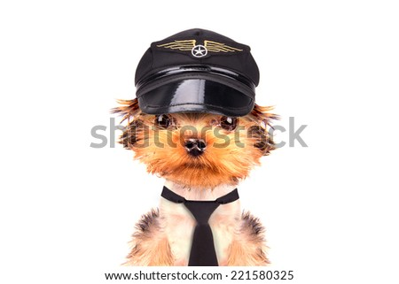 dog  dressed as pilot on a white background - stock photo