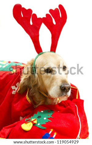 Dog dressed as Santa Claus with gifts on a white background - stock photo