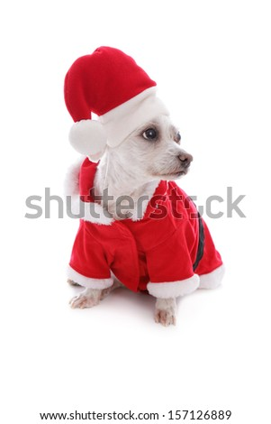 Dog dressed in a Santa Claus costume looks sideways, possibly at your message.  White background.