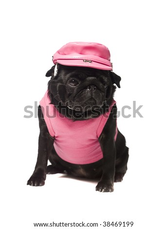 Dog dressed in pink isolated on white