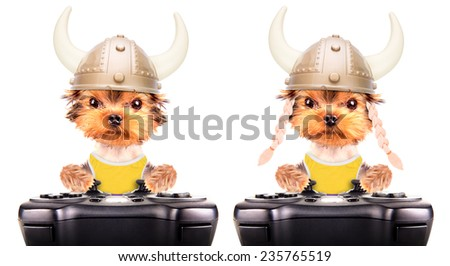 dog dressed up as a viking play on game pad isolated - stock photo