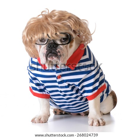 dog dressed up like a human with wig, glasses and shirt on white background - stock photo
