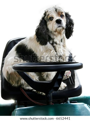 dog driving a vehicle - stock photo