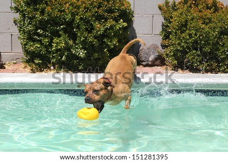 Dog dropping off from the side of the pool for his toy - stock photo