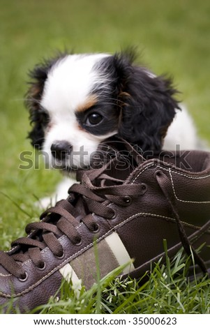 dog eating a shoe in the grass