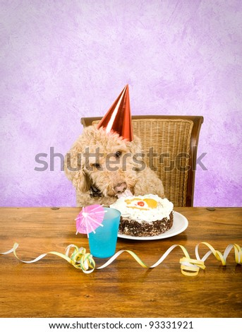 Dog eating cake - stock photo