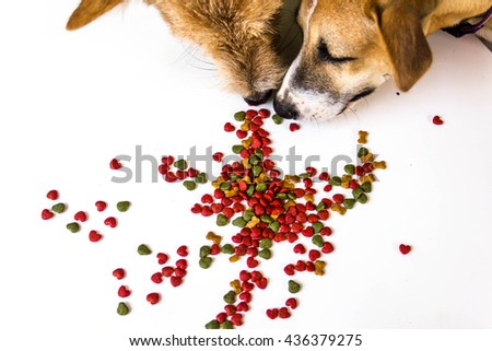 Dog eating dog food on white background  - stock photo